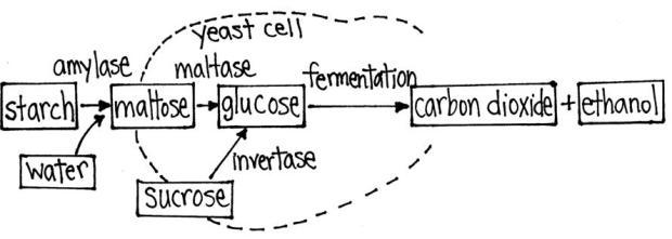 bread-chemistry